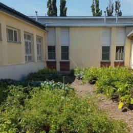 Présentation du jardin potager en permaculture  de Sadyba