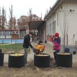 Plantation d'un verger à l'école de Sadyba