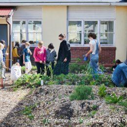 Jardin potager à l'école de Sadyba : Les nouveaux semis prennent place !